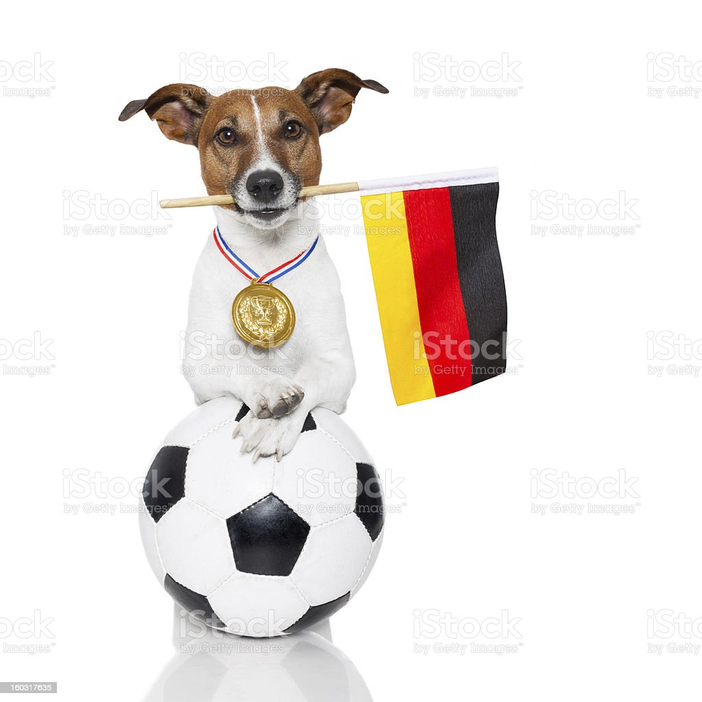 dog as soccer with medal and  flag royalty-free stock photo