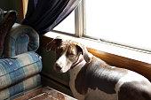 Dog at Bay Window