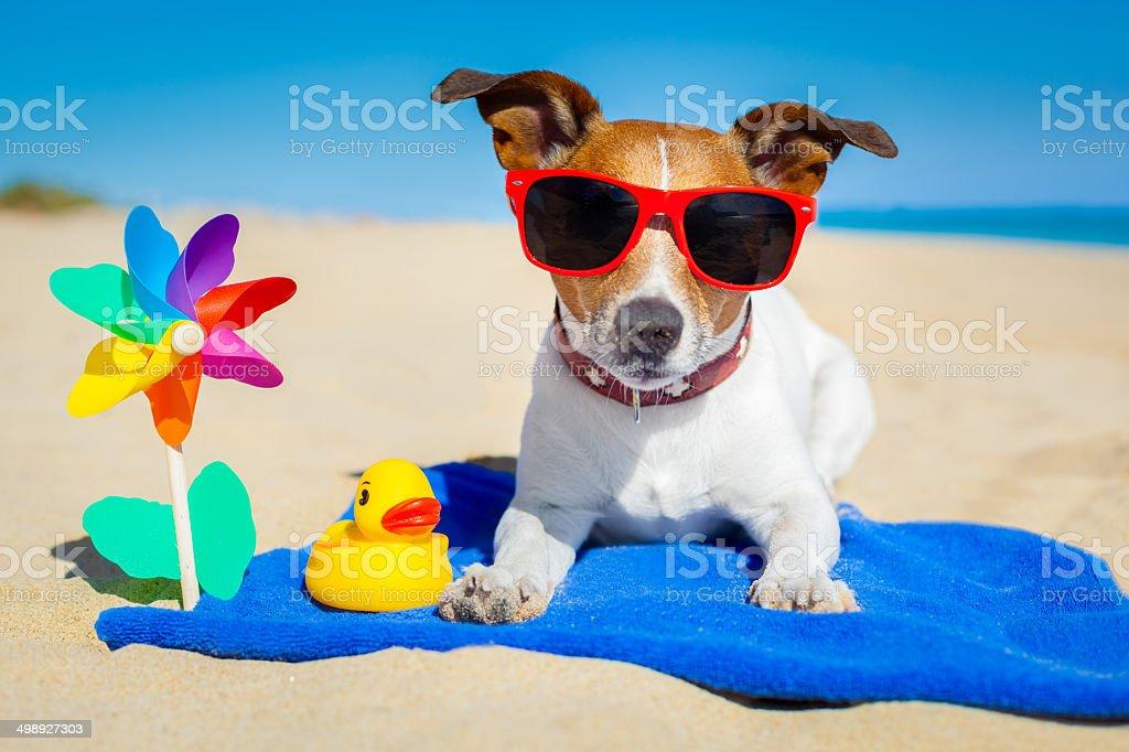 dog at beach royalty-free stock photo