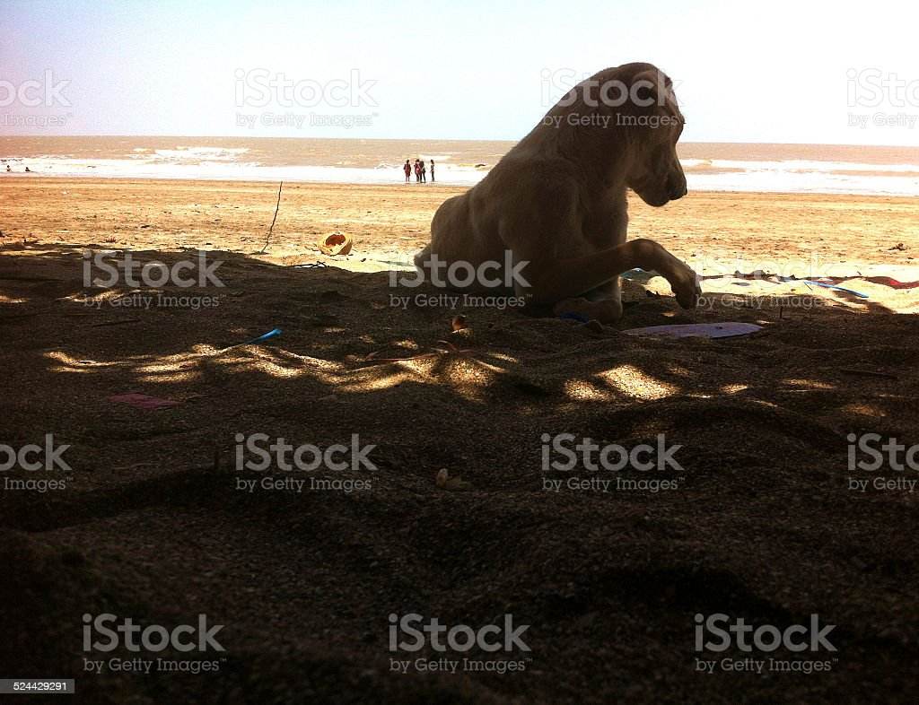 dog at beach stock photo