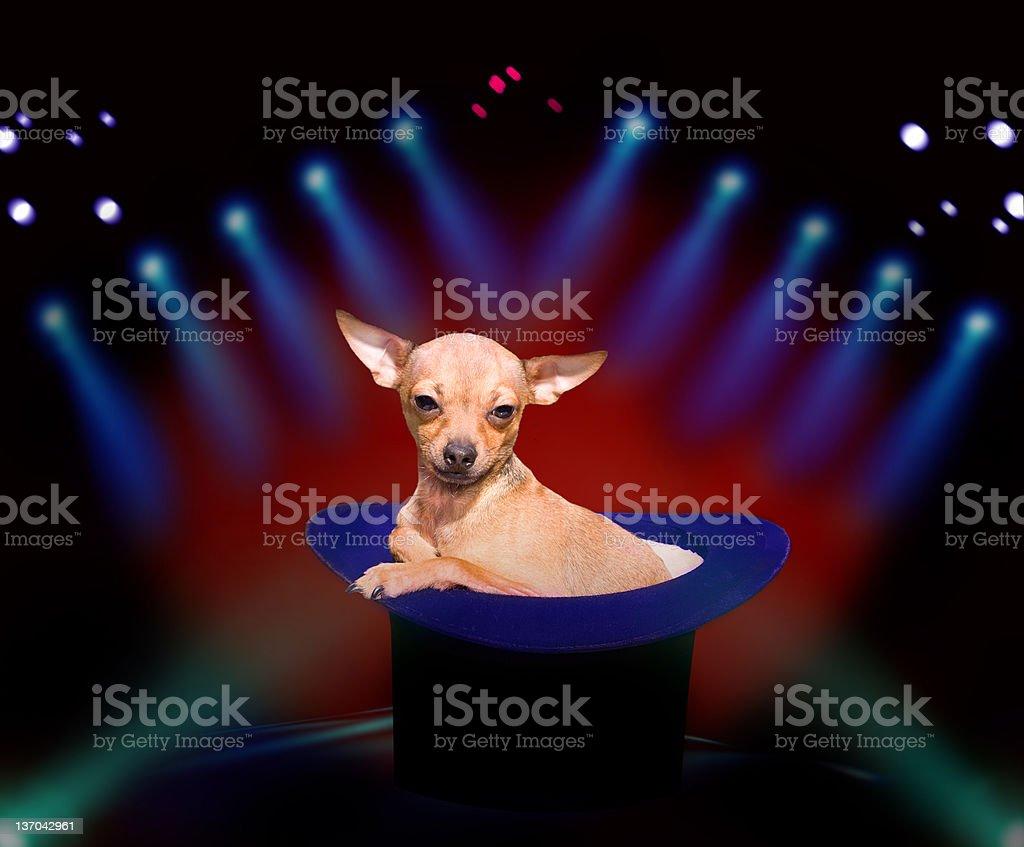 Dog at circus stock photo
