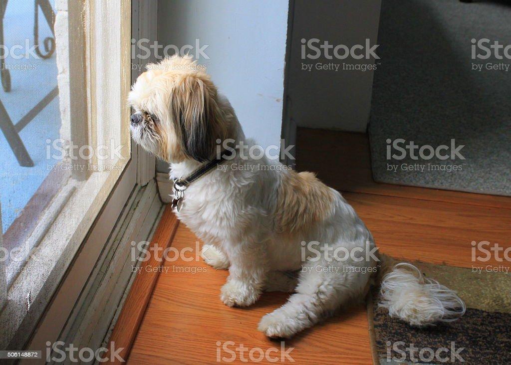 Dog at Door stock photo