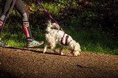 Dog at Golden Gate Park, San Francisco