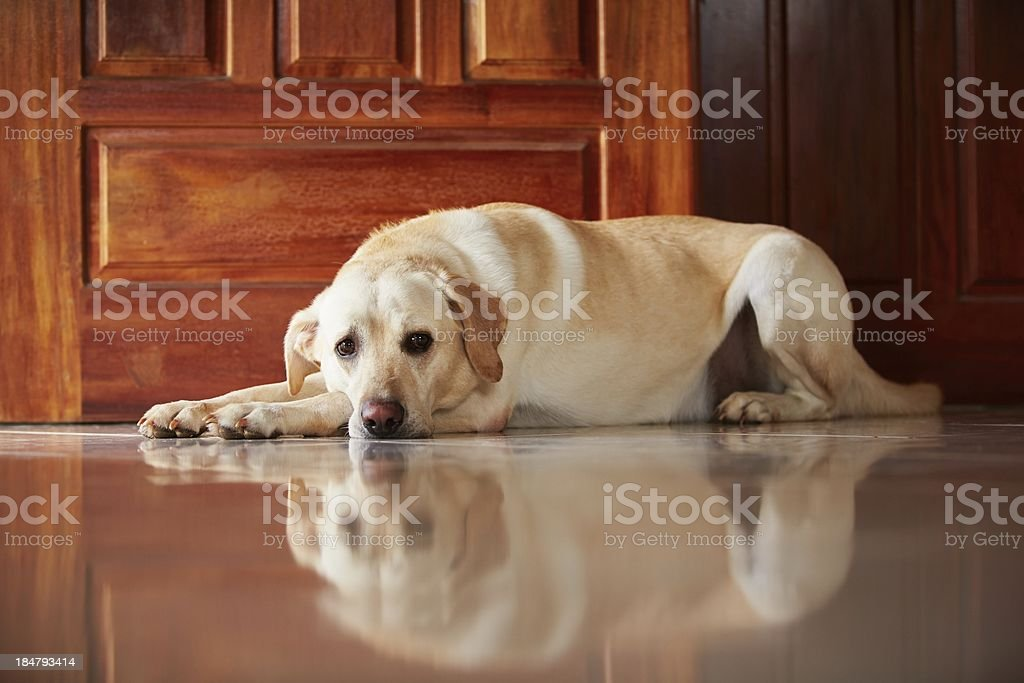 Dog at home stock photo