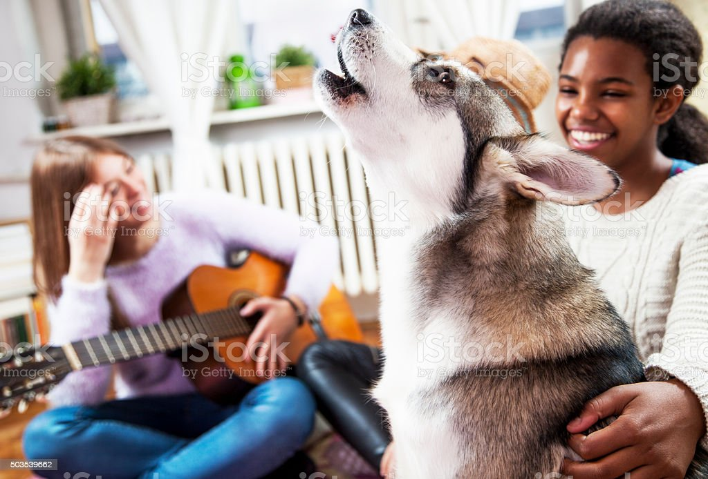Dog at home, with his friends stock photo