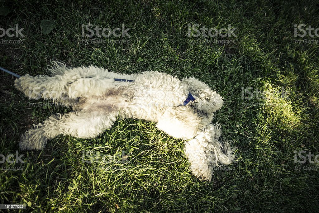 Dog at Park royalty-free stock photo