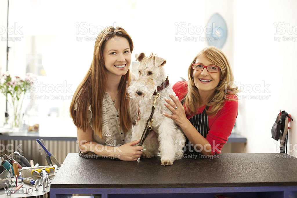 Fox terrier with owner at the Pet Grooming Salon. Perfect picture to...