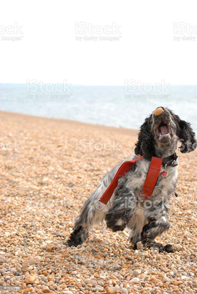 Dog at play stock photo