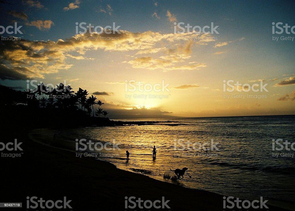 Dog at sunset on Hawaii beach stock photo