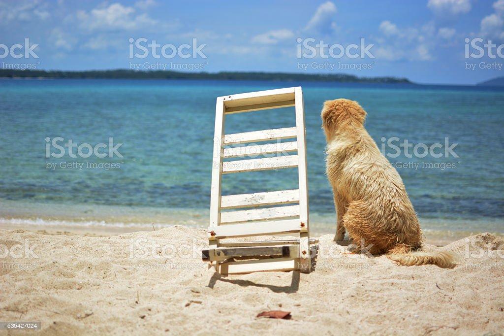 dog at the beach royalty-free stock photo