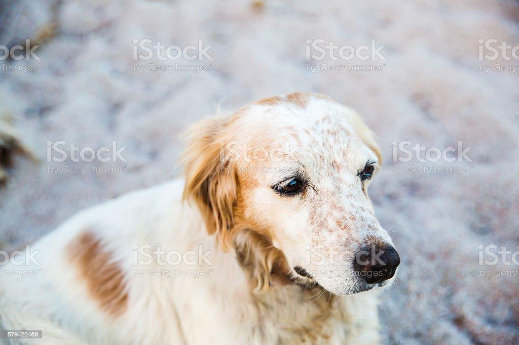dog at the beach stock photo