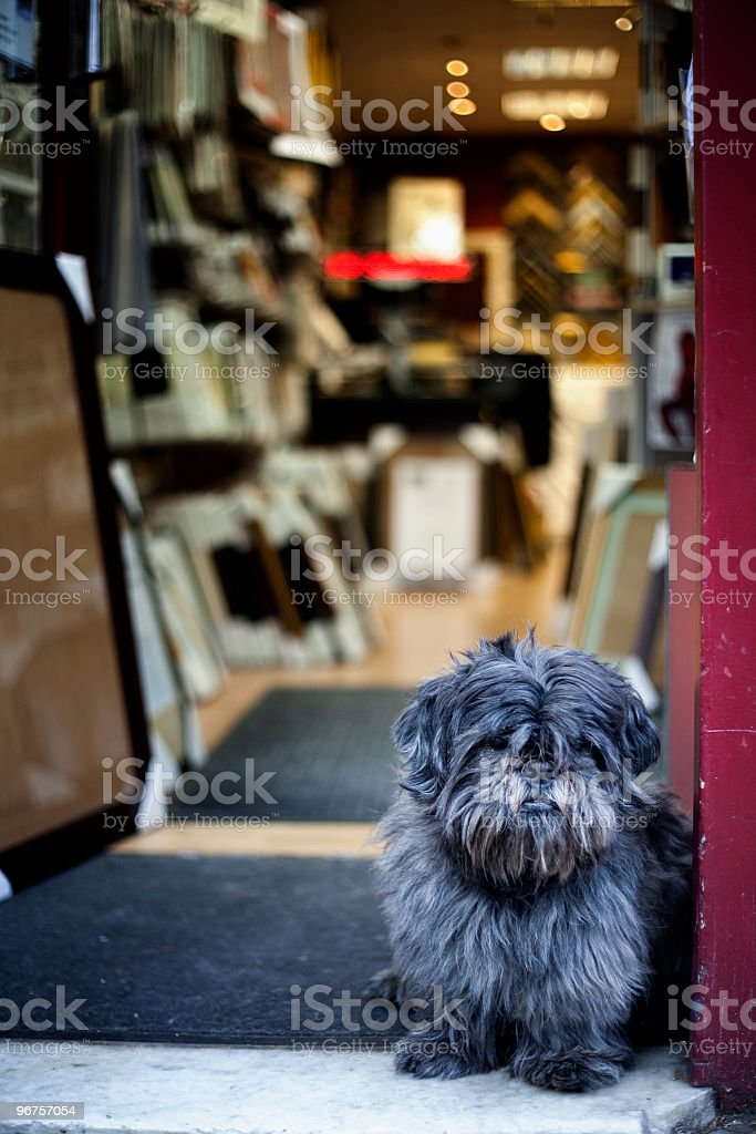 dog at the door of a shop royalty-free stock photo