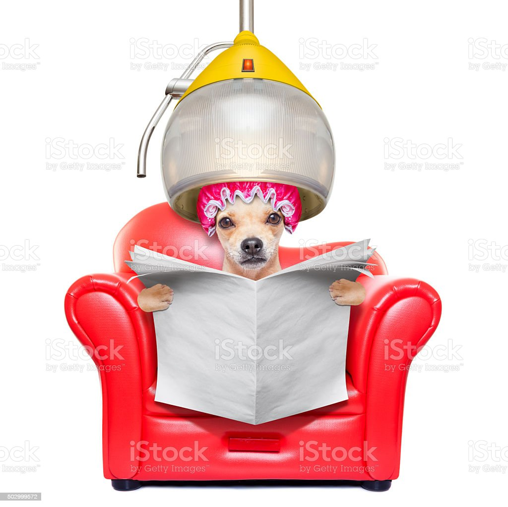 dog at the  hairdressers, grooming stock photo