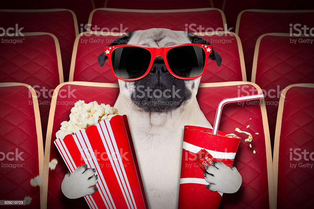 dog at the movies stock photo