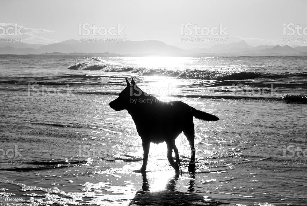 Dog at the sea in backlight stock photo