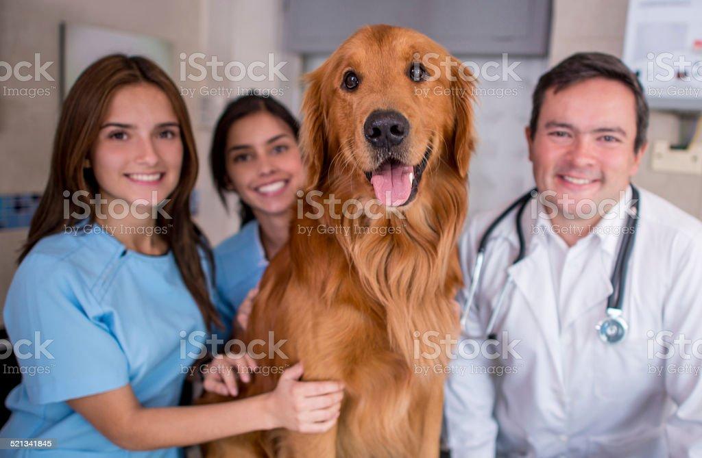 Dog at the Vet stock photo