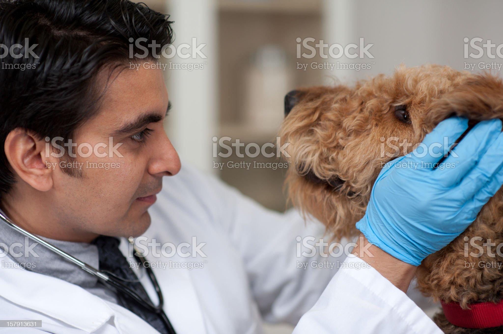 Dog at Vet royalty-free stock photo