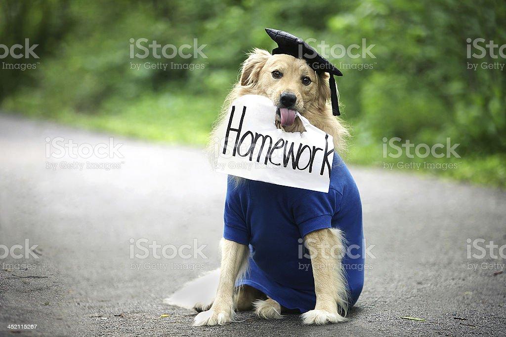 Dog Ate Homework stock photo
