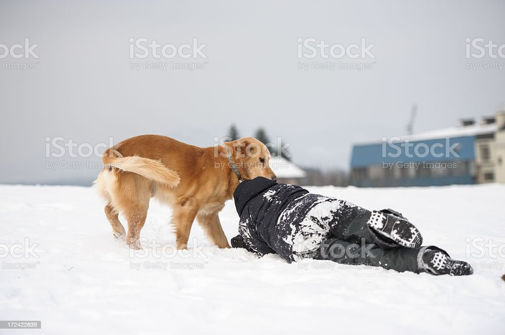 Dog attack royalty-free stock photo