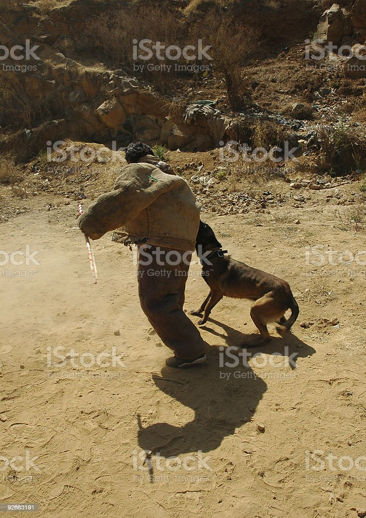 Dog Attack royalty-free stock photo