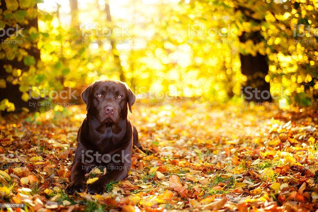 Dog Autumn Sunny stock photo