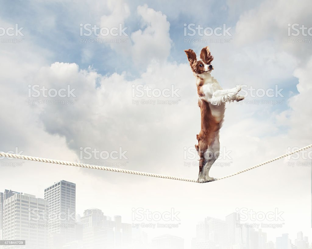A dog balancing on a tightrope in the city stock photo