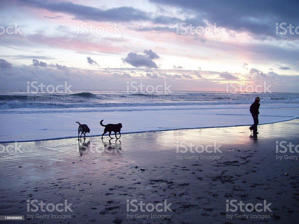 Dog Beach at Sunset royalty-free stock photo