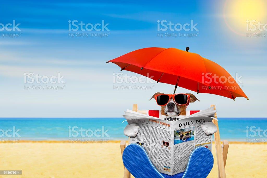 dog beach chair stock photo