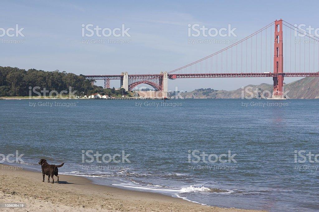 Dog Beach royalty-free stock photo