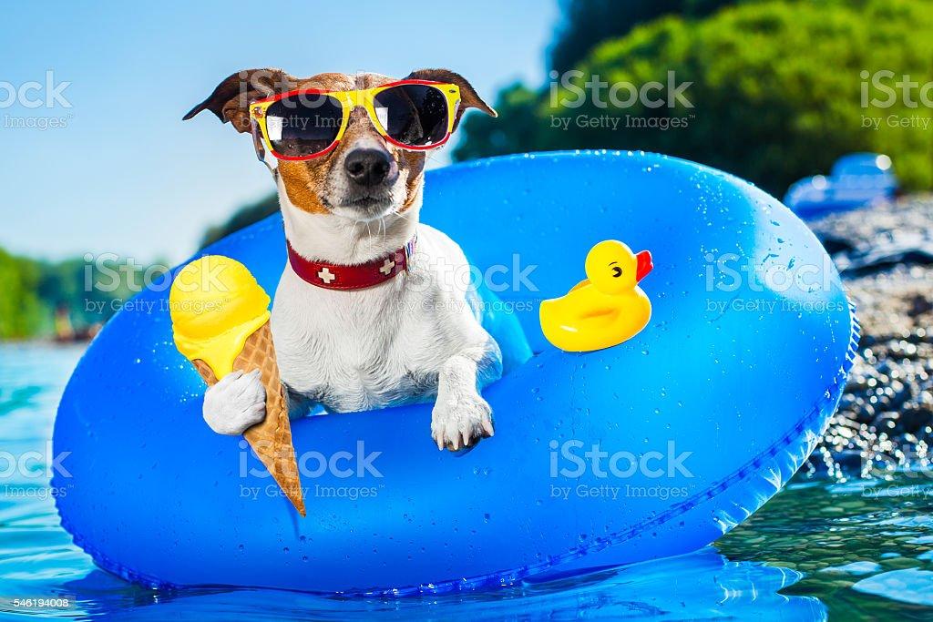 dog beach summer vacation stock photo