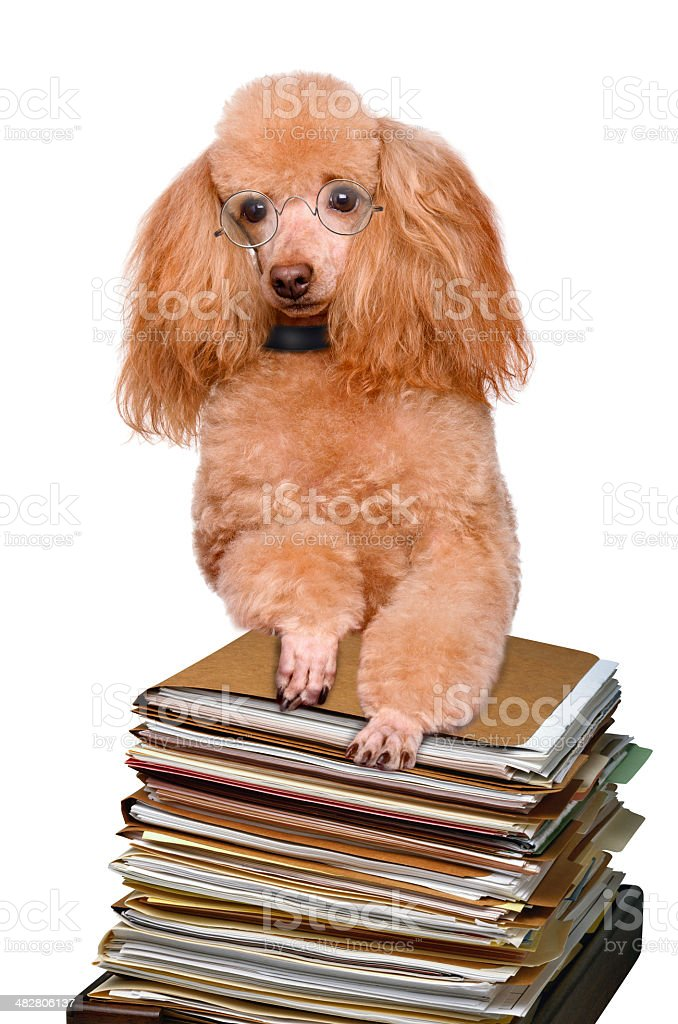 dog behind a tall stack of books royalty-free stock photo