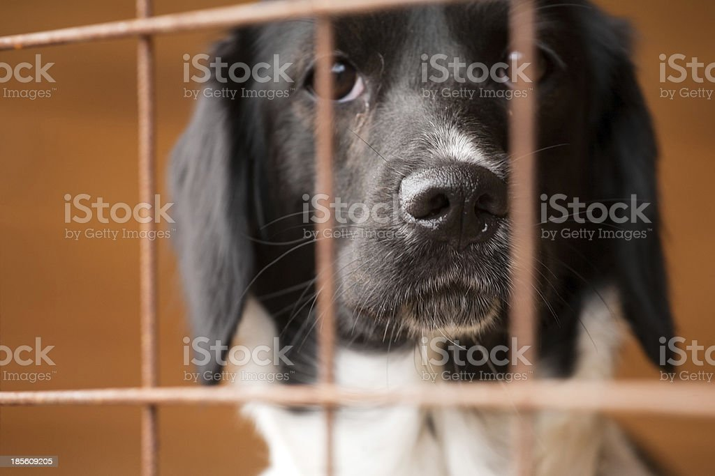 dog behind bars stock photo