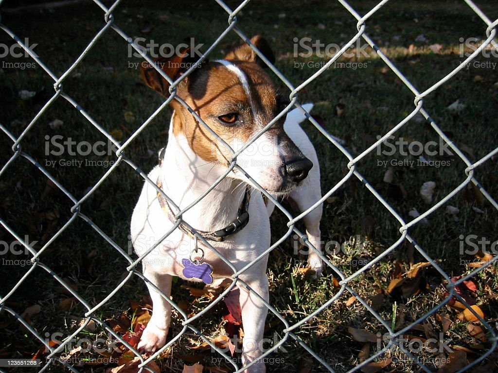 Dog behind fence stock photo