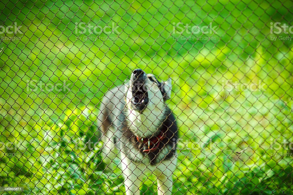 Dog behind the fence stock photo