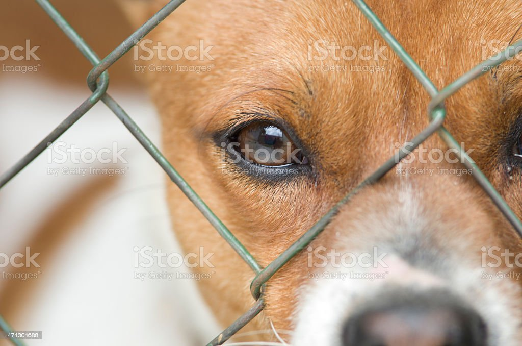 Dog behind wire mesh stock photo