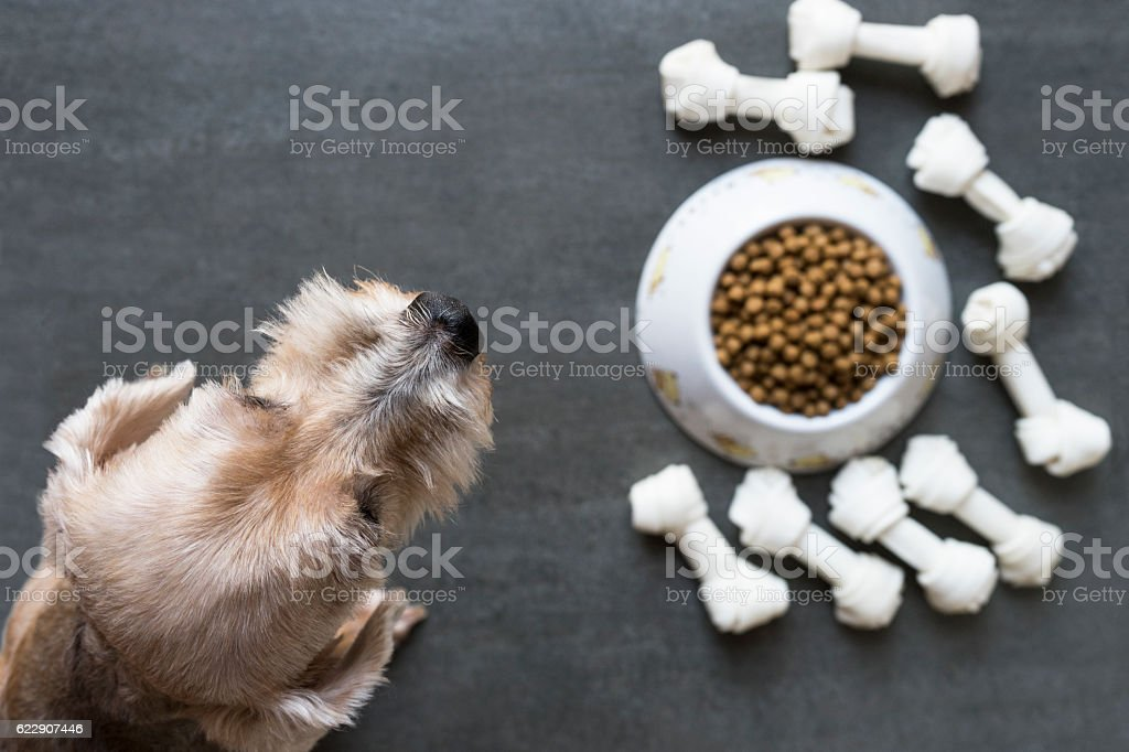 dog besides a bowl of kibble food, top view stock photo