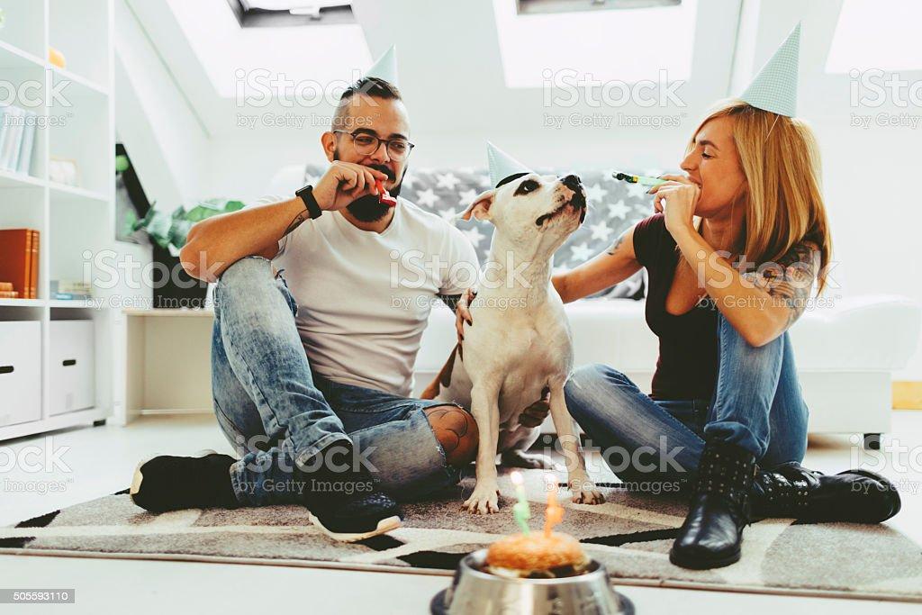 Dog Birthday Party stock photo