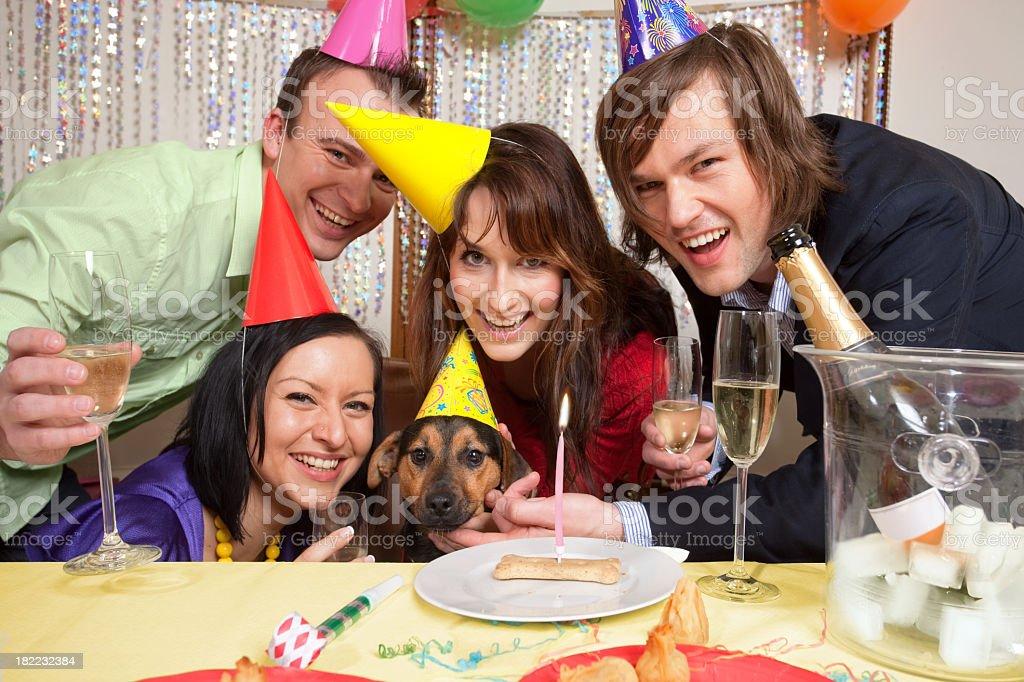 Dog  Birthyday royalty-free stock photo