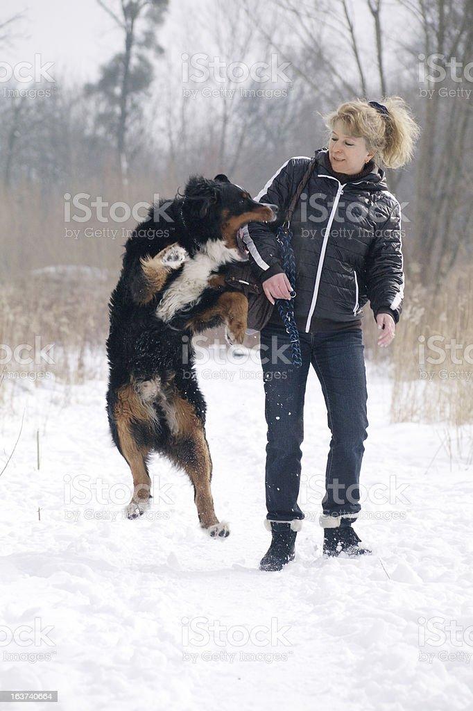 dog bites woman stock photo