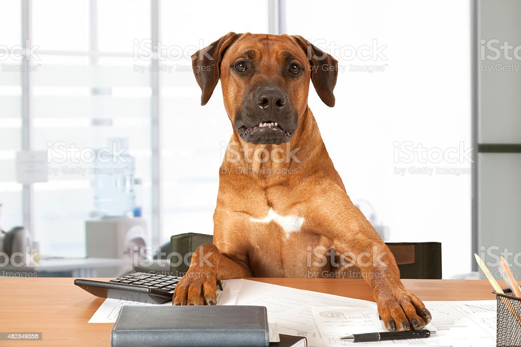 Dog Boss stock photo
