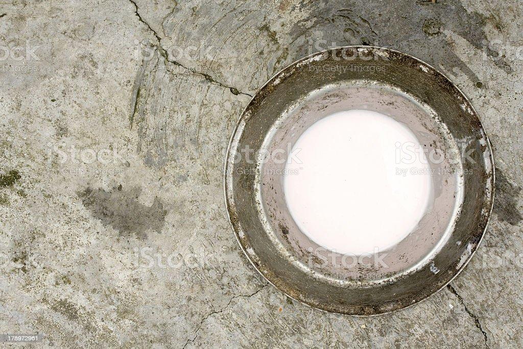 Dog bowl stock photo