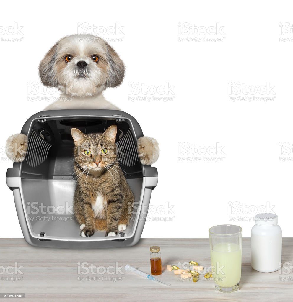 dog brought his cat friend to the vet clinic stock photo