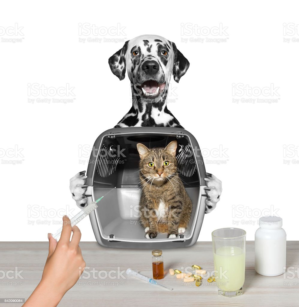 dog brought his cat friend to the vet stock photo