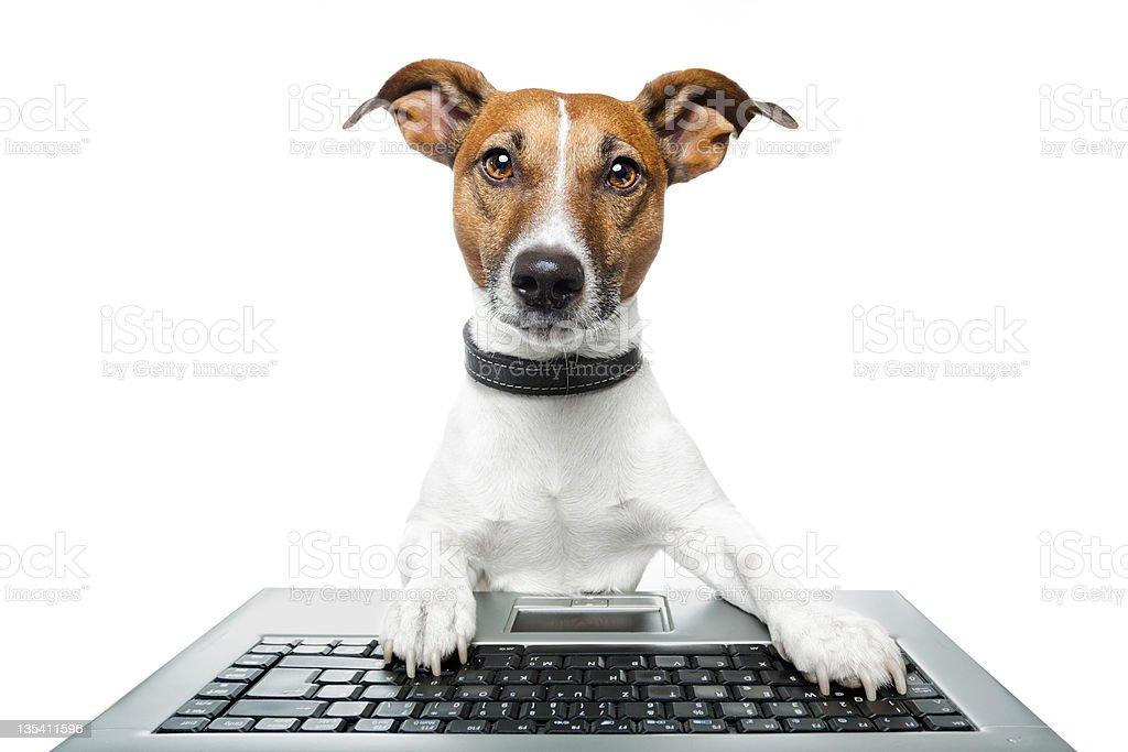 dog browsing the internet stock photo