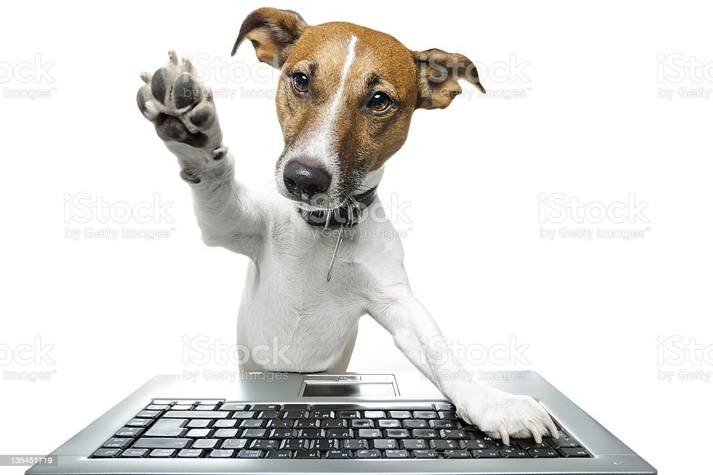 Dog browsing the internet royalty-free stock photo