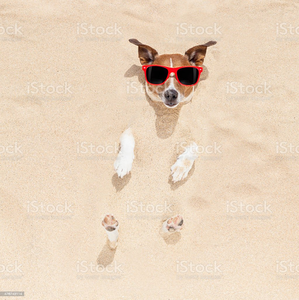 dog buried in sand stock photo