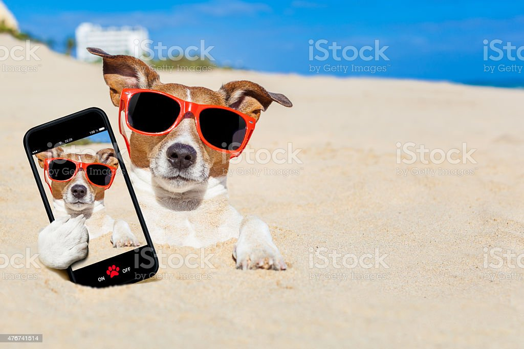 dog buried in sand selfie stock photo