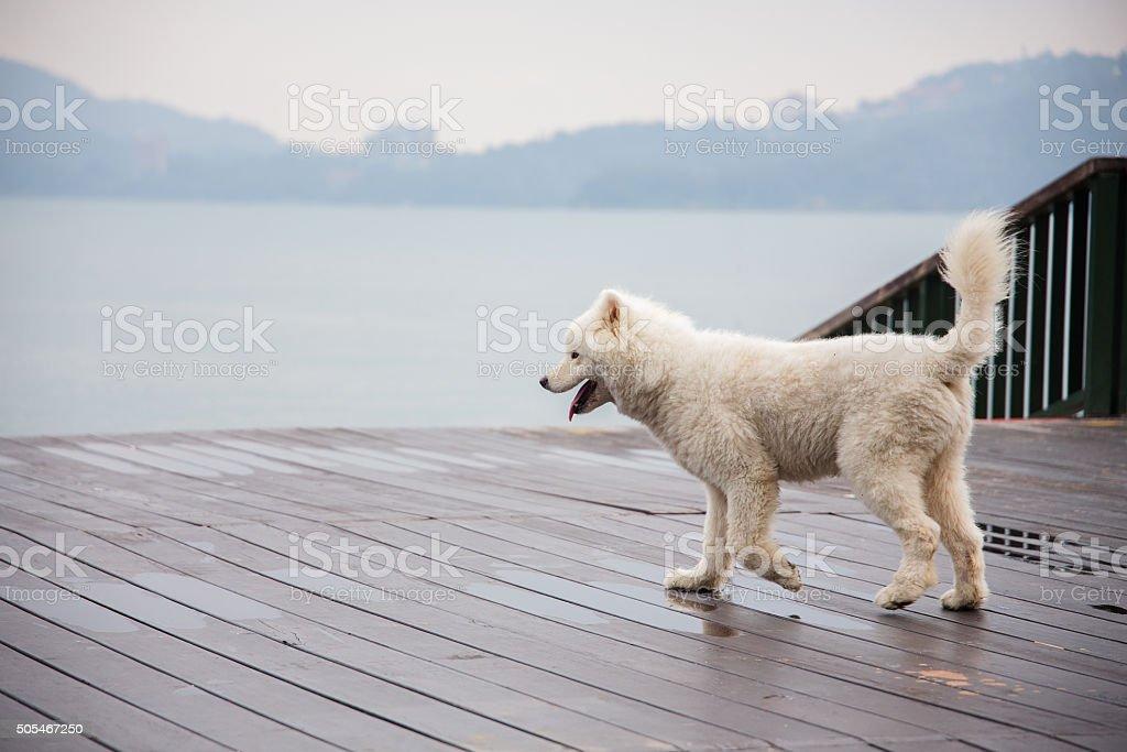 Dog by lake stock photo