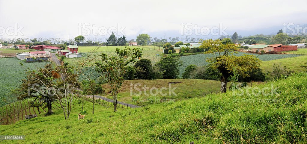Dog by the farm entrance royalty-free stock photo