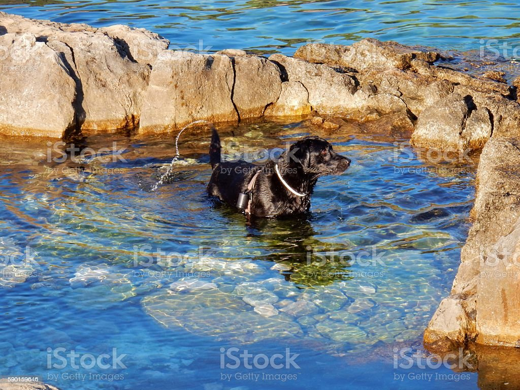 Cane al mare stock photo